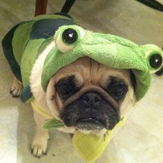 Turtlepug