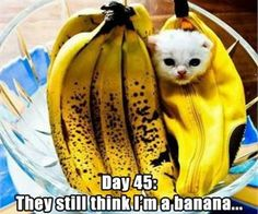 22 Funny Animal Pics for Your Monday | Love Cute Animals