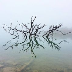 Texas Hill Country We think this is really a simplistically stunning shot, taken by Jay Huskey on the banks of Canyon Lake this morning. February 3, 2015