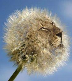(2016-07) Blomst + løve = bløve?