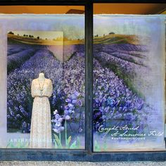 <span>Our Summer 2014 Windows</span>
