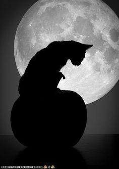 Full Moon at Halloween. ☚