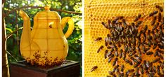 Tomáš Libertíny works with bees to create amazing honeycomb structures that will last for thousands of years!