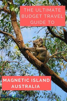 Ultimate Budget Travel Guide to Magnetic Island in Australia {Big World Small Pockets} Coast Australia, Australia Travel, Australia 2017, Australia Photos, Queensland Australia, Travel Advice, Travel Guides, Travel Tips, Australian Holidays