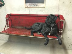 Big dog Ernie on Ford tailgate bench