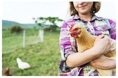 10 Fascinating Chicken Facts