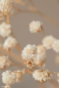 Gypsophila Flower, Baby Wallpaper, Collage Design, Macro Shots, Wall Collage, Dried Flowers, Aesthetic Wallpapers, Background Images, Royalty Free Images
