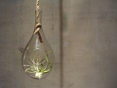 テラリウムとは、小さな植物を密閉されたガラスの容器や瓶などの中で植栽し、楽しむこと。 容器内のグリーンは、日の光を浴びて光合成をします。 エアプランツや多肉植物は水やりがいらない(もしくは時々でOK)のでお手入れも簡単。 手軽にお部屋の中で植物を楽しめるのです。