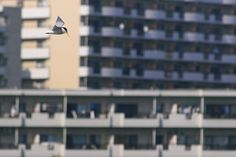 "look bird ""undersurface"" (photography by Yukihiro Yoshida) http://digianalogue.com/photoblog/archives/2006/05/look_bird_under.php"
