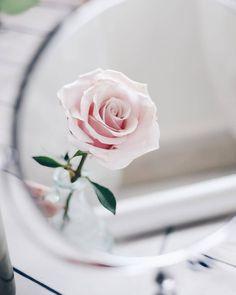 جميل تمبلر وردة