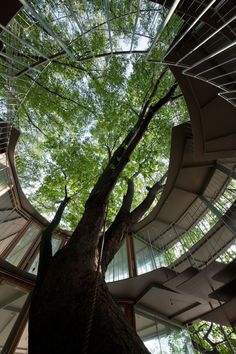 'ring around a tree' by tezuka architects, tachikawa, tokyo, japan, a dual-purpose annex building at fuji kindergarden   - designed by the duo in 2007. sited adjacent to the existing school, the structure functions as   both english-language classrooms and as a waiting station for school buses.