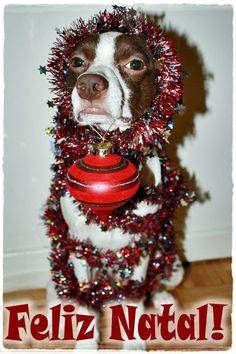 """Conheçam o """"Top Model"""" canino Zinque e sua absoluta desenvoltura diante das câmeras!!!"""