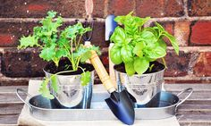 How To Make A Container Garden + 6 Easy-To-Grow Plants To Include - mindbodygreen.com