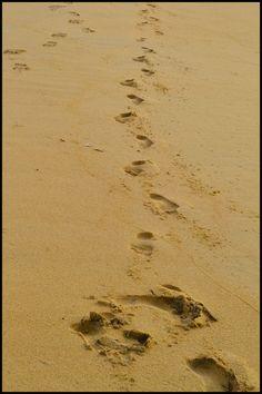 Следы на песке. Негомбо. Шри-Ланка  freeliving.ru