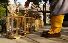 A Monk and His Birds Photo and caption by Enna Bartlett caption A monk attending to his pet birds at the Wild Goose Pagoda, Xi'an, China. Rich & I were here too! Antique Bird Cages, The Wild Geese, Photo Location, Wild Birds, World Cultures, Pet Birds, China, Pets, Caption