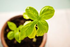 Get 3 great dishes from a solitary grower. Be inspired to have a one-pot vegetable greenhouse.