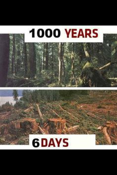 This is male violence against Forests (against the Living World).