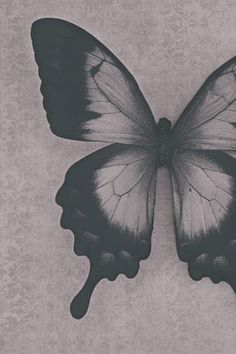 Black Wallpaper: Black and white butterfly photography print Butterfly Black And White, Black And White City, Black And White Drawing, White Art, Butterfly Photos, Butterfly Wallpaper, Butterfly Art, Butterflies, Butterfly Background