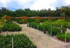 Garden Center in Ft. Myers - TopTropicals.com
