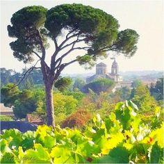 Sunday in the Benanti vineyards.  #etnawines.  The Wine Maestro's photo blog