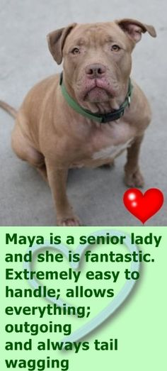 SAFE❤️❤️ 3/16/16 BY PITTIES.LOVE.PEACE❤️ THANK YOU❤️ SUPER URGENT Brooklyn Center MAYA – A1066810 FEMALE, BROWN, AM PIT BULL TER MIX, 6 yrs OWNER SUR – EVALUATE, HOLD FOR ID Reason PERS PROB Intake condition UNSPECIFIE Intake Date 03/06/2016 http://nycdogs.urgentpodr.org/maya-a1066810/