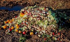 23 Organizations Eliminating Food Waste During COVID-19