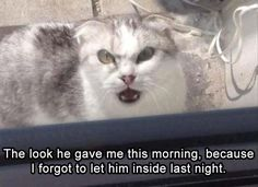 20 Funny Animal Memes And Pictures Of The Day