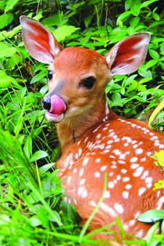 'Licky Lulu' by Donna Herrmann of High Bridge won a first prize in the recent photo contest sponsored by the state Department of Environmental Protection in celebration of the 50th anniversary of the Green Acres parkland acquisition program.