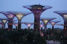 Garden by the Bay at Marina Bay in Singapore