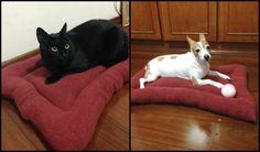 Como fazer cama de cachorro e gato