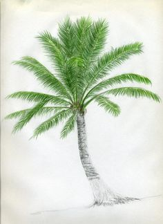 How To Draw Palm Trees palm tree drawing - Drawing Tips Tree Drawings Pencil, Pencil Drawing Tutorials, Drawing Tips, Easy Drawings, Painting & Drawing, Watercolor Paintings, Drawing Drawing, Art Paintings, Drawing Ideas