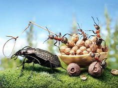 ants-000