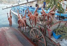 Туризм в Порос, Греция - 4521 отзыв и фотография - TripAdvisor Poros Greece, Travel Memories, Trip Advisor, Tourism, Fair Grounds, Island, Vacation, Wonderful Places, Greece