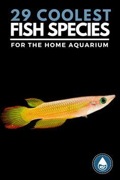 Tropical Freshwater Fish, Freshwater Aquarium Fish, Nitrogen Cycle, Floating Plants, Beautiful Sea Creatures, Home Aquarium, Cool Fish, Fish Care