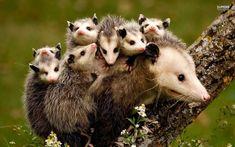 Madres con sus crias32