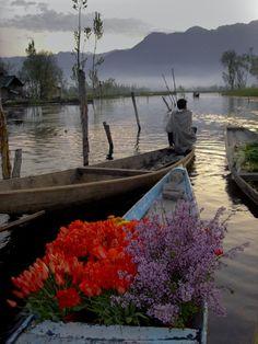 tranquility - flower vendor on Dal Lake, India