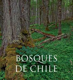 Bosques de chile  Los bosques nativos o naturales de Chile ocupan una superficie de 13,6 millones de hectáreas en circunstancia que las plantaciones forestales apenas cubren 2,3. Este libro presenta los bosques naturales formados por especies autóctonas, ya sean primarios no intervenidos o provenientes de la regeneración natural posterior a la tala, quema o el arrastre causado por un desastre natural. Chile, I Want To Know, Go Green, South America, Flora, Places To Visit, Tours, Landscape, Nature