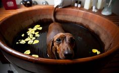 Veja 80 dicas de pet shops, hotéis, feiras de adoção e espaços de lazer para…