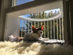 Cat Solarium Conservatory Package The Ultimate Cat Window BoxCat Solarium SunRoom Package: The Ultimate Cat Window Box Industrial Strength Velcro, Cats Outside, Cat Window, Cat City, Cat Perch, Sun And Water, Mesh Screen, Catio, Cat Furniture