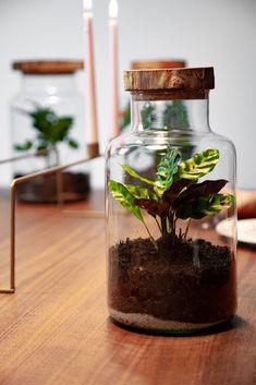 Eine Pflanze am Morgen vertreibt Kummer und Sorgen. 🌱 Und um diese Pflanze musst du dich kaum kümmern! Im Gegenteil, je mehr du die in Ruhe lässt, desto besser geht es ihr! Terrarium, Home Decor, Tropical Rain Forest, Home Decor Accessories, Plants, Glass, Terrariums, Homemade Home Decor, Interior Design