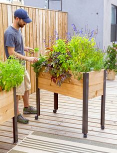 man pictured caring for flowers and herbs in a self-watering elevated planter box on back deck