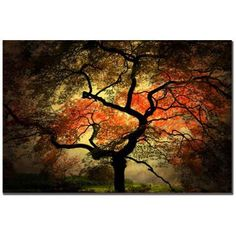 Trademark Fine Art Japanese Tree by Philippe Sainte-Laudy Canvas Wall Art A gorgeous gallery wrapped canvas piece that features beautif. Japanese Tree, Japanese Wall, Japanese Prints, Japanese Bedroom, Japanese House, Tree Canvas, Canvas Frame, Canvas Wall Art, Abstract Canvas