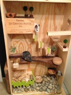 DIY cage idea: large box turned vertically (for limited space) and add different levels/platforms. Use some sort of varnish/sealant to protect wood from urine (make sure whatever is used is not going to be harmful to the chinchillas! Chinchillas, Pet Rats, Cage Chinchilla, Chinchilla Food, Ferret, Cage Hamster, Hamster House, Cage Rat, Degu Cage