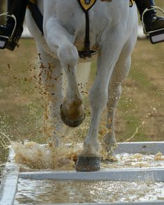A horse navigates through the 'reflecting pool' as part of the obstacle ...