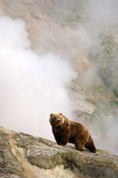 Resultado de imagem para медведь гризли