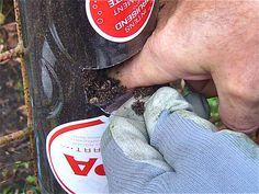 Bottle tower gardening: how to start ? (Willem Van Cotthem)