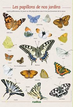Butterfly Gardens France - Illustrations: Isabelle Frances - Rustica for Your House Your Garden Illustration Papillon, Butterfly Illustration, Garden Illustration, Beautiful Bugs, Beautiful Butterflies, Art Papillon, Wild Creatures, Nature Journal, All Nature