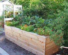 feldsalat anbau und pflege des winterharten salats feldsalat rapunzel und salat. Black Bedroom Furniture Sets. Home Design Ideas