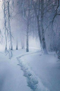 Snowy dream ... misty winter path