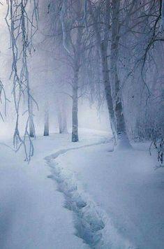 Snowy dream ... misty winter path